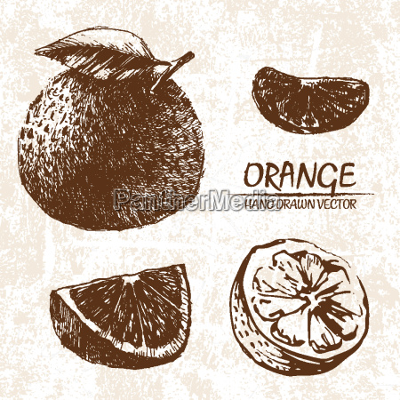 digital vector detailed orange hand drawn