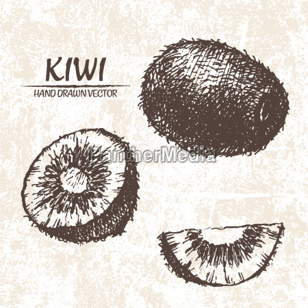 digital vector detailed kiwi hand drawn
