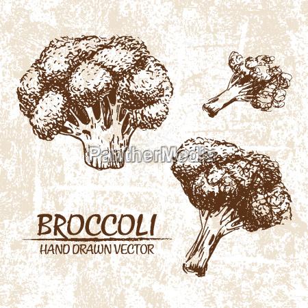 digital vector broccoli hand drawn illustration