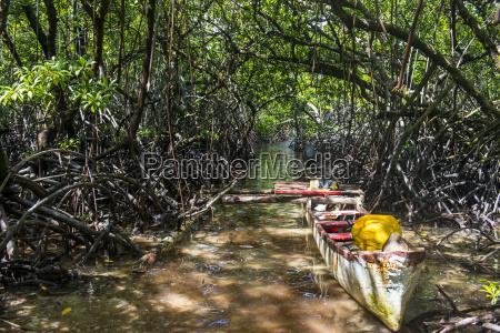 swamp area in the utwe lagoon
