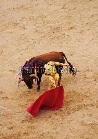 bullfighting novillada picada on the bullring