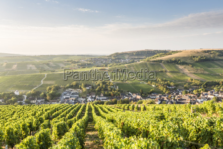 the vineyards of sancerre above chavignol