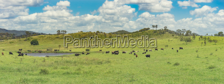 panoramic australian rural landscape