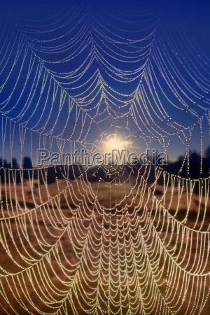 spiderweb monterey bay california