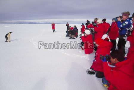 tourists watching emperor penguin weddell sea