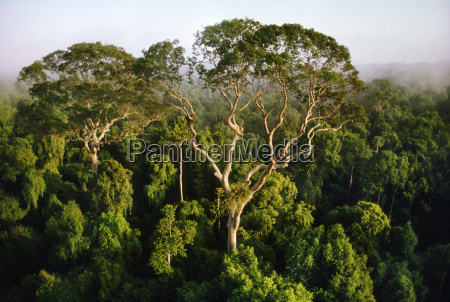 tall trees rising above rainforest canopy