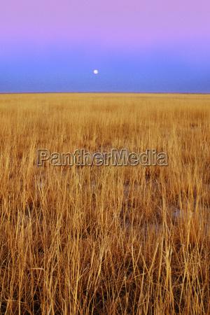 full moon over grassland makgadikgadi pans