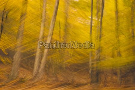 fall color autumn foliage impressionist