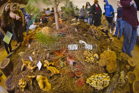 fungus fair santa cruz california