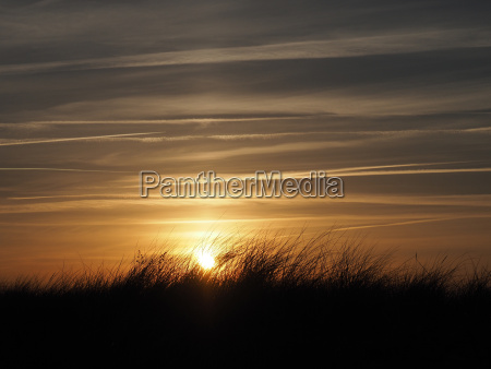 golden sundown with dune grass