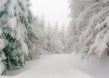 White snowy trail in winter